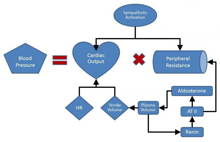 The-mechanism-of-alpha-blockers